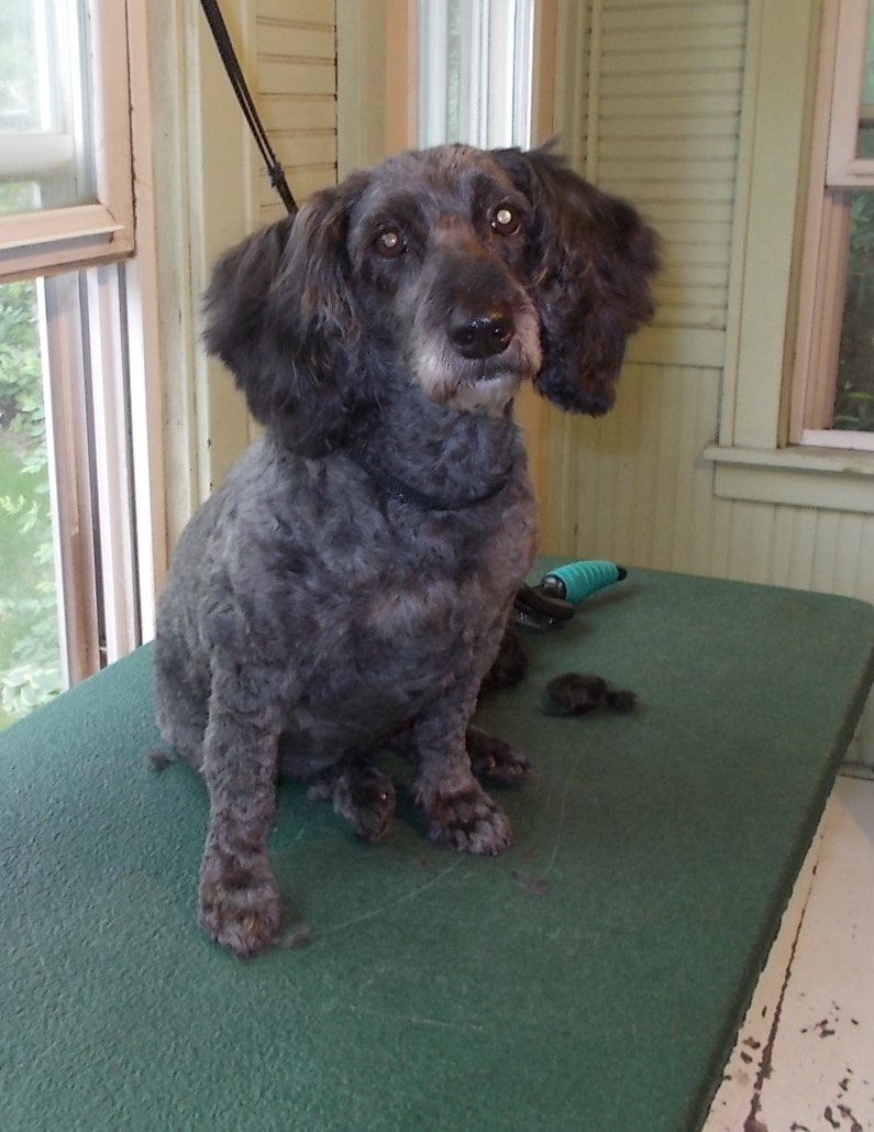 Dog Images Page 3 Good Dog Pet Grooming